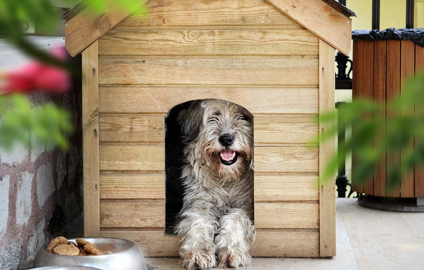 Bezaubernd Hundehütte Aus Paletten Beste Wahl